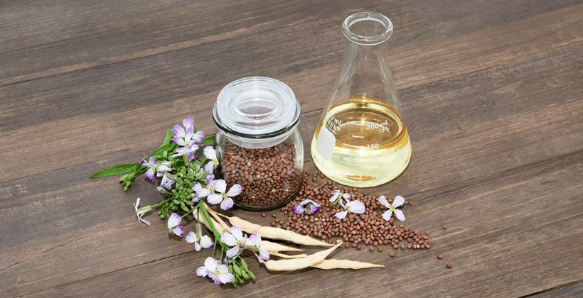 Daikon Seed Extract